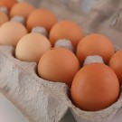 Chicken Fertile Eggs (DOZ) : Soy Free